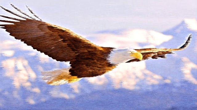 The Eagle Anointing