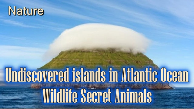 Undiscovered islands in Atlantic Ocean - Wildlife Secret Animals