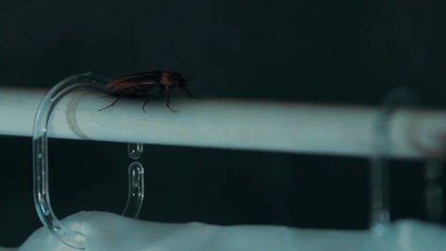 Vine 5 - Say Hello To Roachie !!