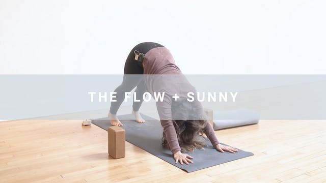 The Flow + Sunny (44 min)