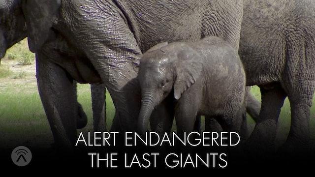Alert Endangered Last Giants