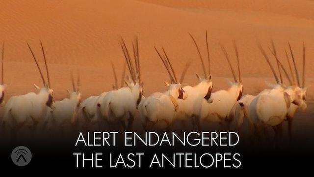 Alert Endangered Last Antelopes