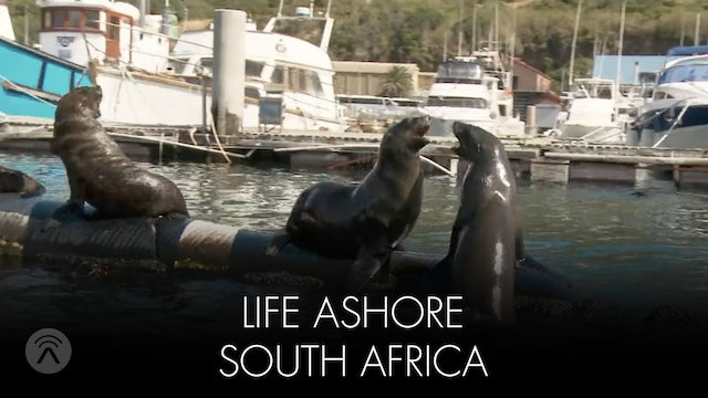 Life Ashore South Africa