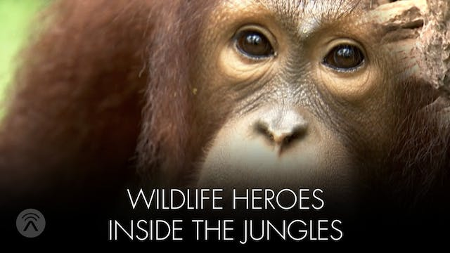 Wildlife Heroes Inside the Jungles