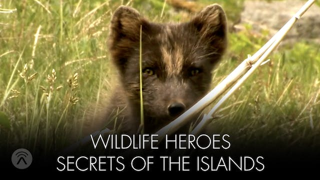 Wild Life Heroes Secret of the Islands