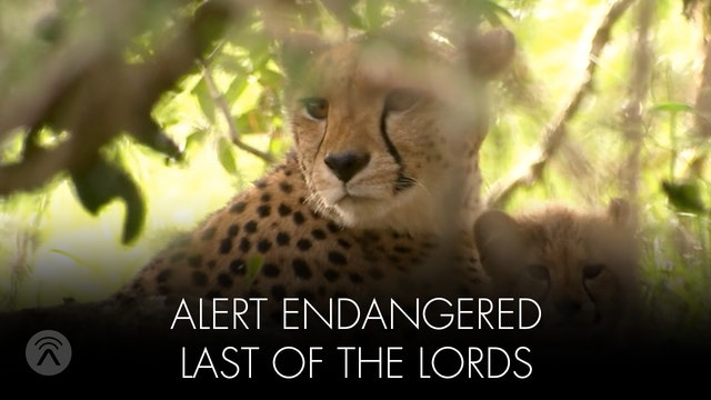 Alert Endangered Last of the Lords