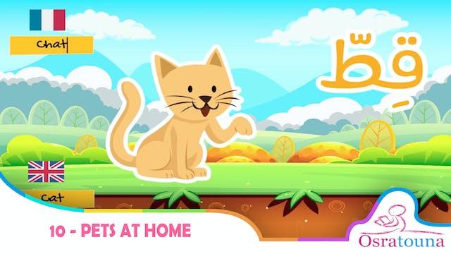 10 - Pets at Home