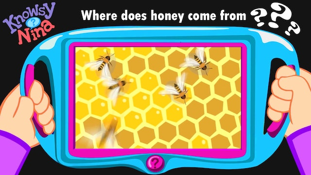Where does honey come from?