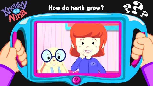 How do teeth grow?
