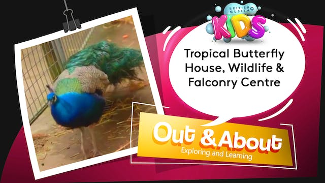 Tropical Butterfly House, Wildlife & ...