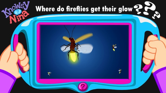 Where do fireflies get their glow?