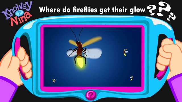 Where do fireflies get their glow?