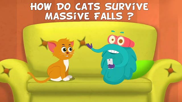How Do Cats Survive Massive Falls