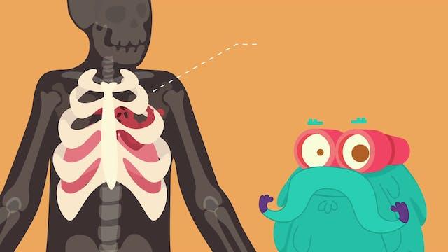 Bones  The Dr. Binocs Show  Learn Vid...