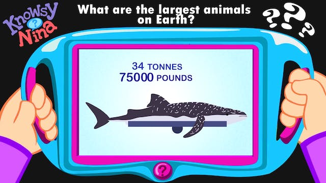 What are the largest animals on Earth?