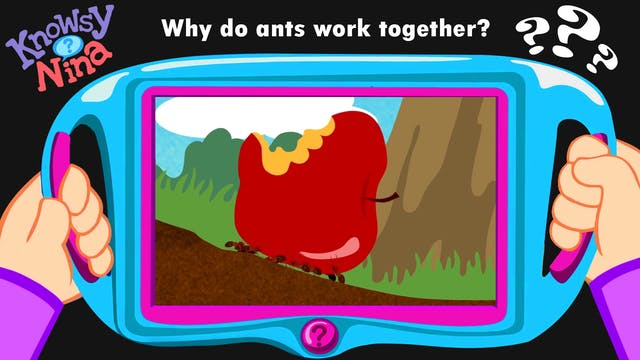 Why do ants work together?