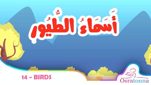 14 - Birds