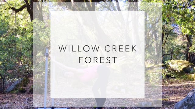 Willow Creek Forest: 20 Minute Full Barre Workout