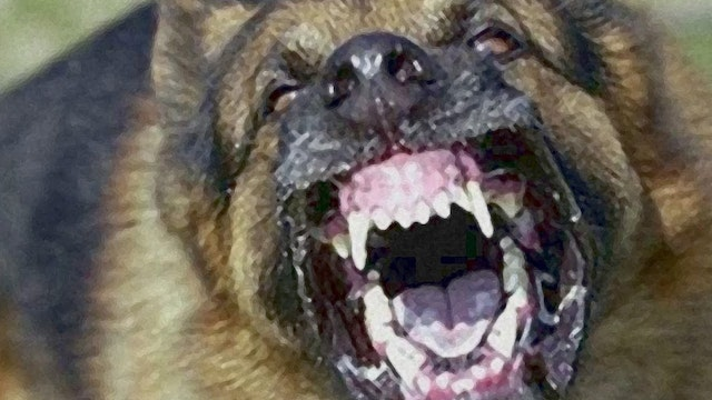MAN MAULED BY DOG TO DEATH DURING BBC...
