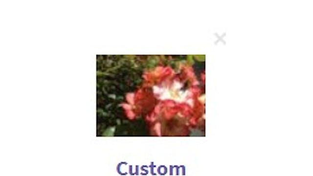 Leaving Virtual Flowers For People In...