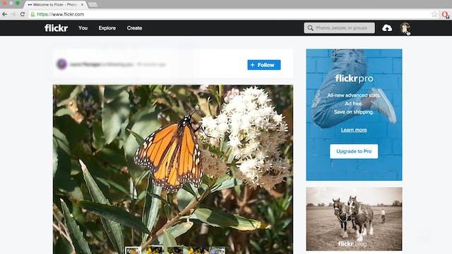 Using Flickr