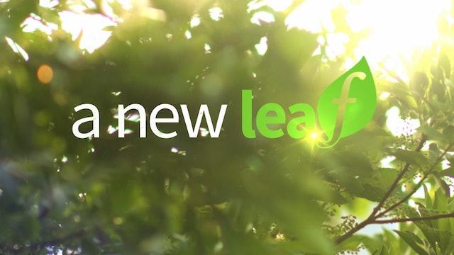 A New Leaf - Shorts