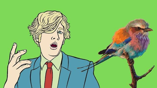 Dicky bird