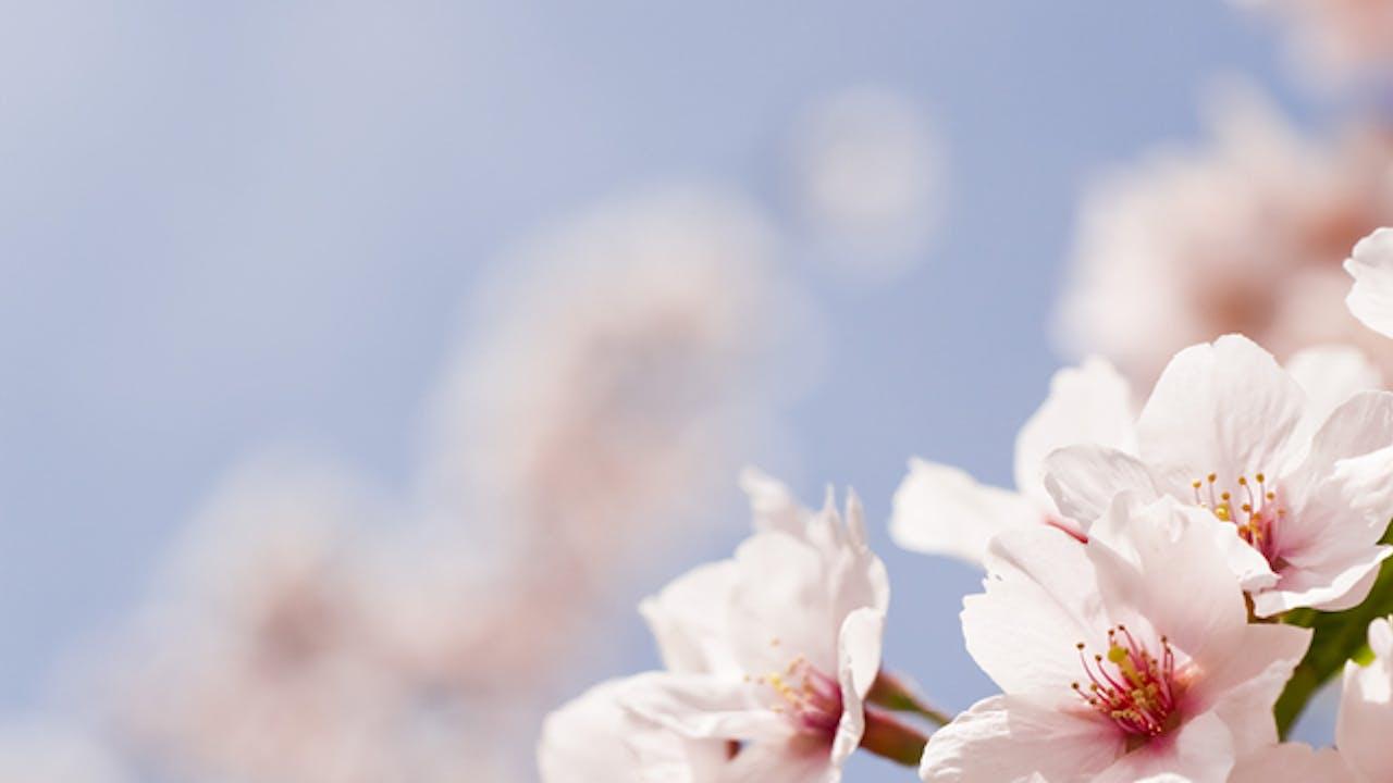 ASO Encore! Novo's Rite of Spring