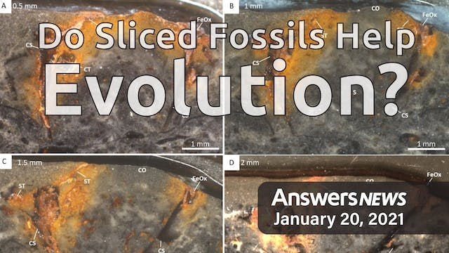 1/20 Do Sliced Fossils Help Evolution?
