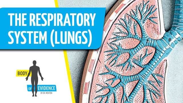 Respiratory System (Lungs) 2