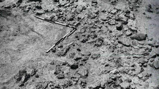 Homo habilis: Evidence for Evolution ...