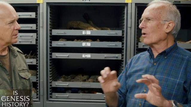 Dinosaur Extinction: Noah's Flood or an Asteroid?