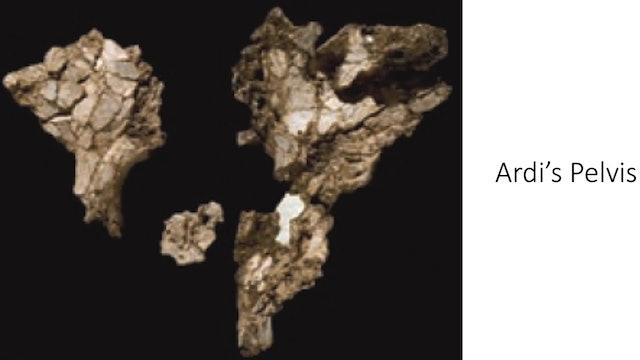 "Genesis Impact Clip - Ardipithecus Ramidus ""Ardi"""