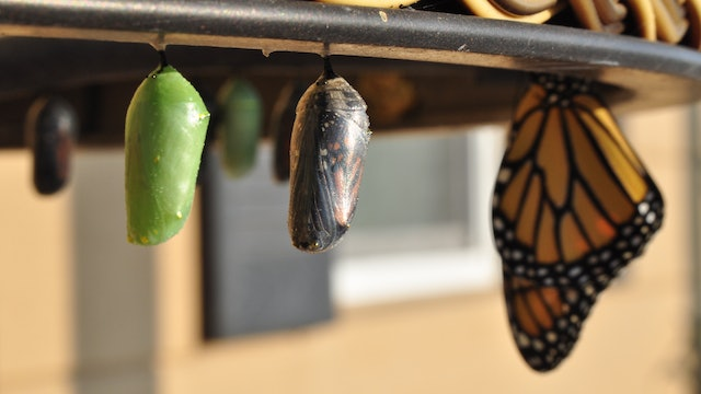Metamorphosis: from Bug to Beauty