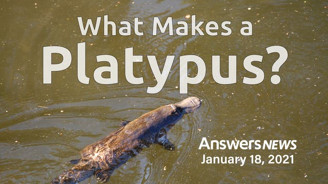 1/18 What Makes a Platypus?
