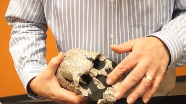Evolutionists Fabricate Ape-Men