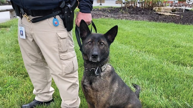 Meet Suza - one of our K9 dogs