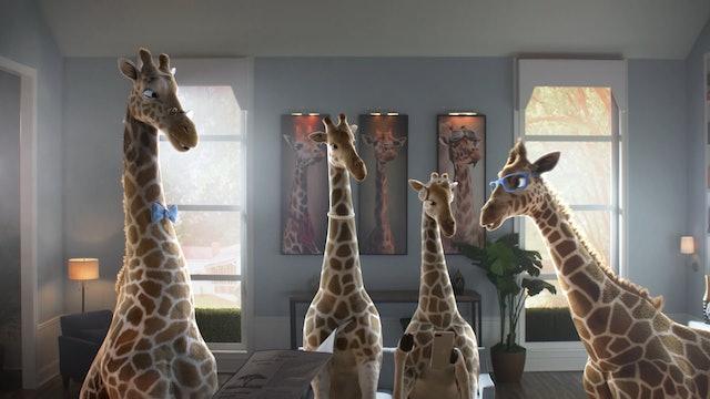 Meet Junior, Gracie, George, & Gloria: The Giraffe Family at the Ark Encounter