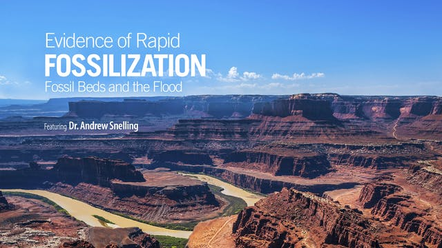 Evidence of Rapid Fossilization