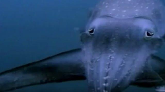 Incredible Creatures That Defy Evolut...