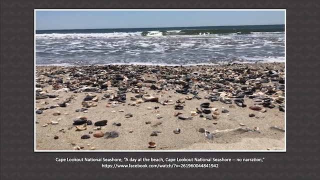 4/27 Seashells Pile Up on North Carolina Beaches