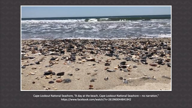 4/27 Seashells Pile Up on North Carol...