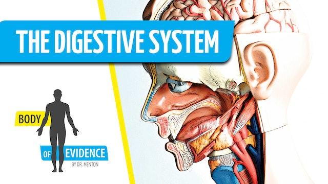 Digestive System 2