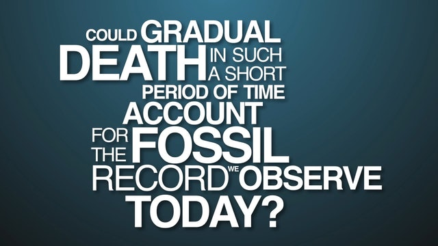 Fossils and the Flood