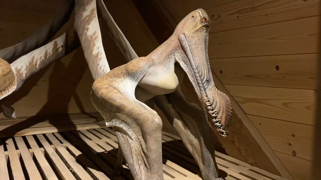 Animal Encounters of a Different Kind: Inside the Ark