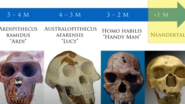 Neanderthals: Evidence for Evolution or Just Human?
