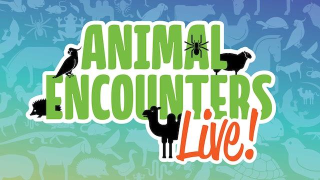 Animal Encounters Live