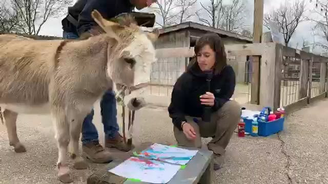 A Donkey Painting?