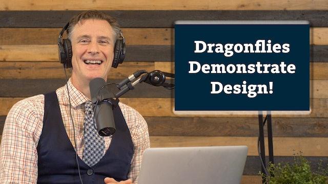 Amazing Animals 1 of 7 - Dragonflies Demonstrate Design!