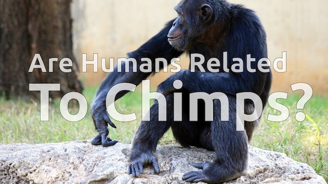 Are Humans Related to Chimps?